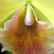 Orchid 21 Art Print