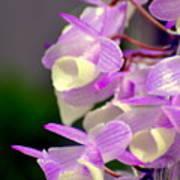 Orchid 25 Art Print