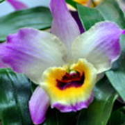 Orchid 34 Art Print