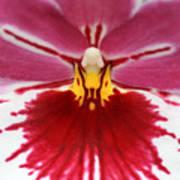 Orchid 4 Art Print