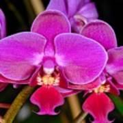 Orchid 422 Art Print