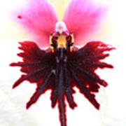 Orchid 5 Art Print