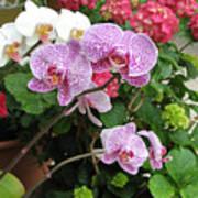 Orchid 6 Art Print