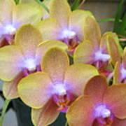 Orchid 7 Art Print