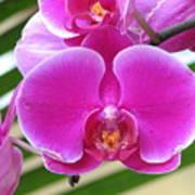 Orchid 8 Art Print