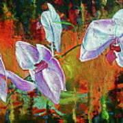 Orchid A Art Print