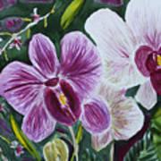 Orchid At Aos 2010 Art Print
