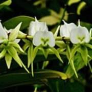 Orchid Choir Art Print
