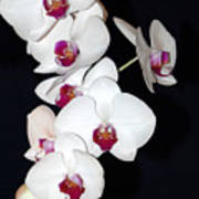 Orchid Cluster Art Print