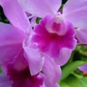 Orchid Deep Art Print