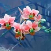 Orchid Flowers 8 Art Print