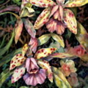 Orchid Garden Art Print by Ann  Nicholson
