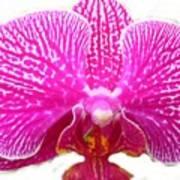 Orchid I Pretty Art Print