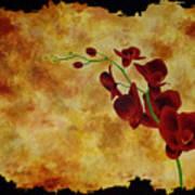 Orchid Interplay Art Print
