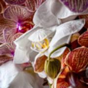 Orchid Iv Art Print