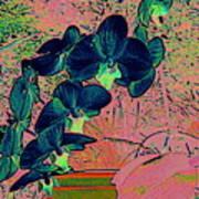 Orchid Japanaise Art Print