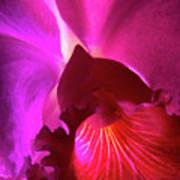Orchid Landscape Art Print