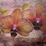 Orchid Layers Art Print
