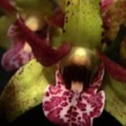 Orchid Lights Art Print