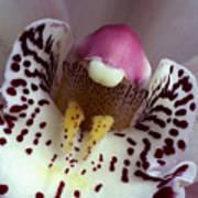 Orchid Like A Muzzle Art Print