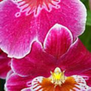 Orchid Love Art Print