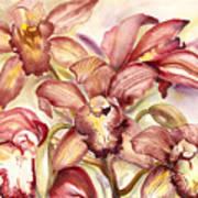 Orchid Medley Art Print