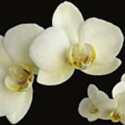 Orchid Montage Art Print