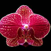 Orchid On Black 2 Art Print