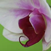 Orchid On Green Art Print