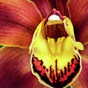 Orchid Queen Art Print