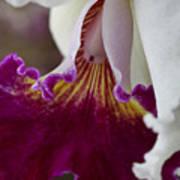 Orchid Ruffle Art Print