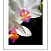 Orchid Spring Poster Art Print