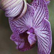 Orchid Strips Art Print
