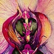Orchid Tabernacle Art Print