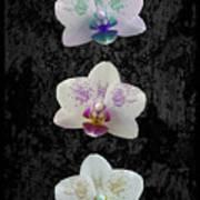 Orchid Trio Art Print