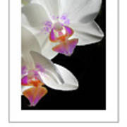 Orchid Underneath Poster Art Print