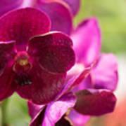 Orchid Vanda Ratchaburi Waxy Red Art Print