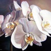 Orchidee Art Print