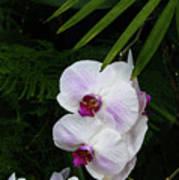 Orchids #1 Art Print
