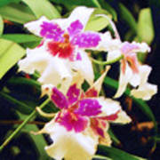 Orchids 1 Art Print