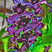 Orchids 1714 Art Print
