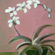 Orchids 2 Art Print