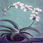 Orchids 5 Art Print