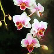 Orchids Abound Art Print