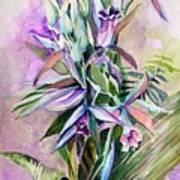 Orchids- Botanicals Art Print