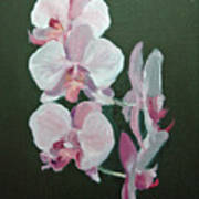 Orchids For Didi Art Print