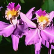 Orchids In Costa Rica Art Print