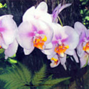 Orchids Of Hawaii Art Print