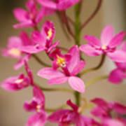Orchids On Stem Art Print