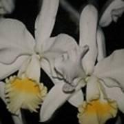 Orchids Satin Art Print